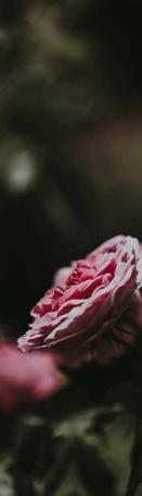 Screen Shot 2018-08-02 at 12.19.29 AM